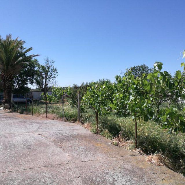http://www.fincabienvenido.com/wp-content/uploads/2017/05/Alquiler-casa-rustica-en-Corella-Navarra-35-640x640.jpg